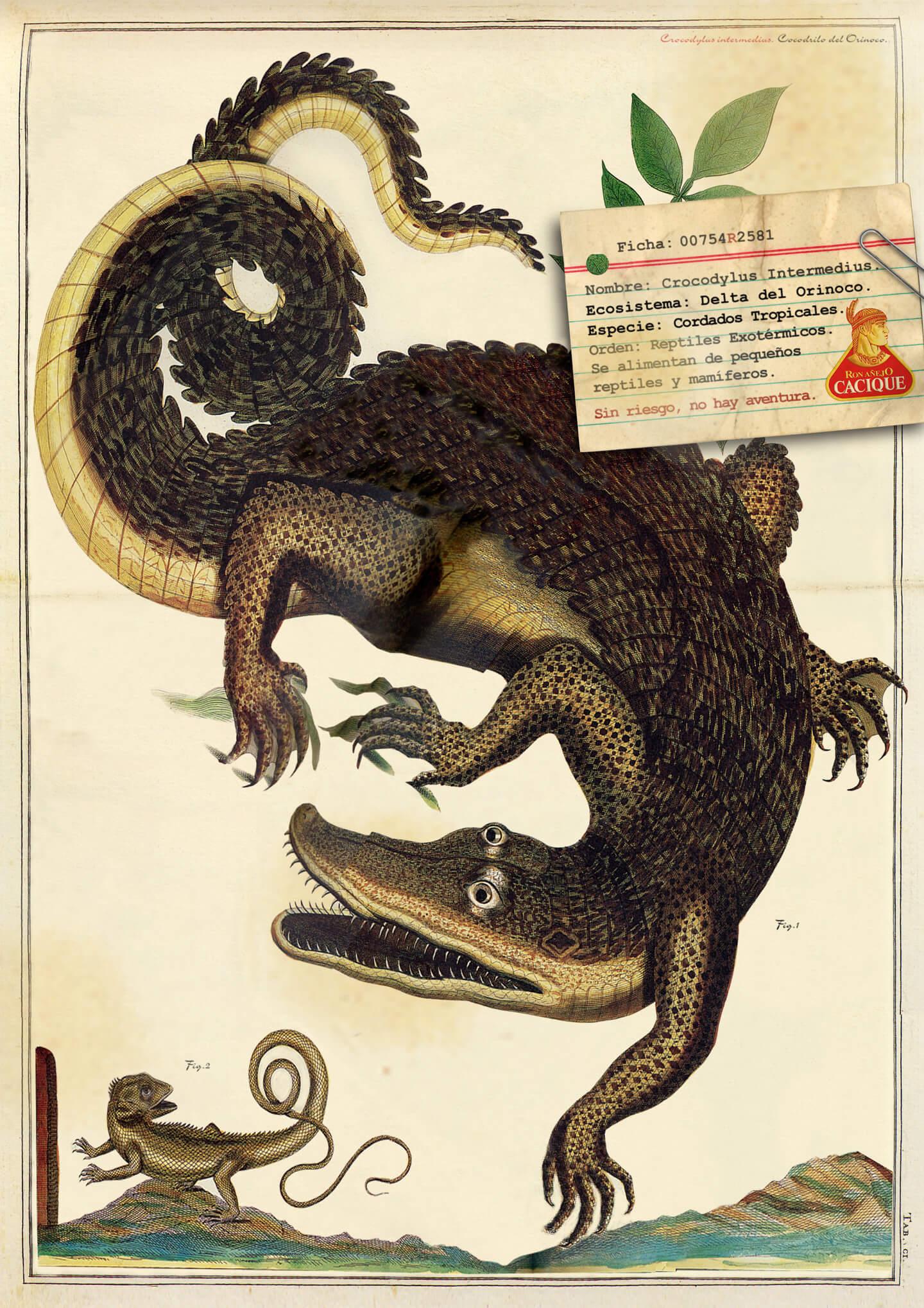 004-cacique-cocodrilo