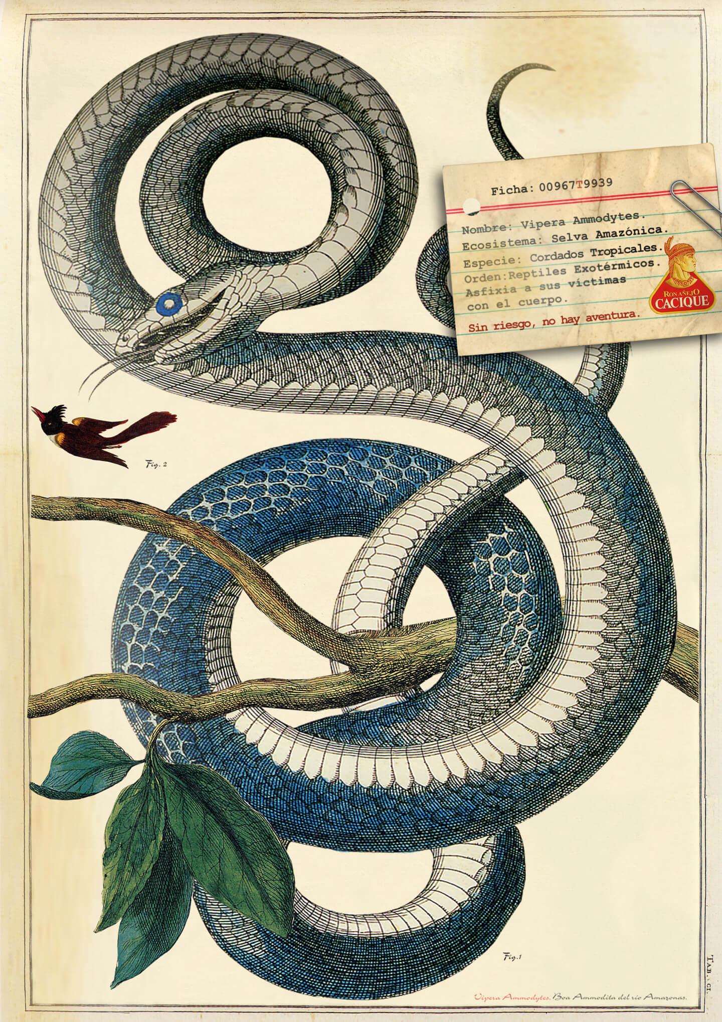 004-fcacique-serpiente